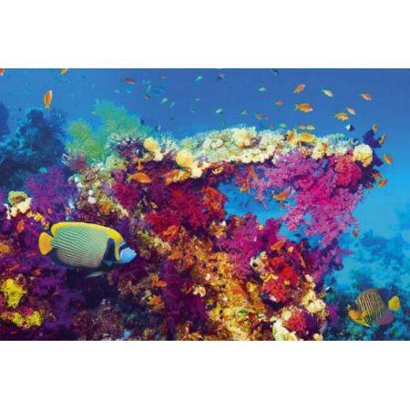 Tropikalne Wody Ryby Na Rafie Koralowej Plakat