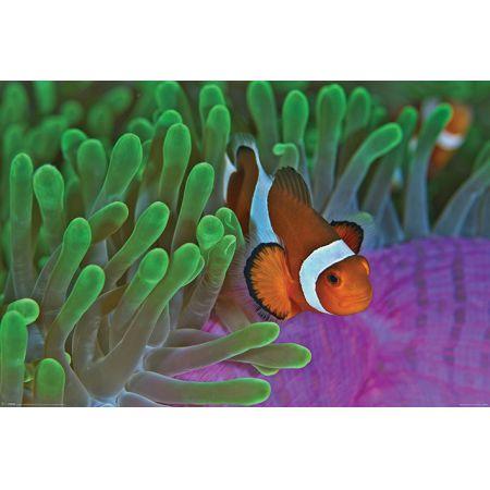 Błazenek Rafa Koralowa Plakat