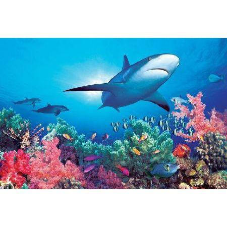 Podwodne życie Rafa Koralowa I Rekin Plakat