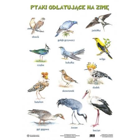 Plansza Ptaki odlatujące na zimę Ptaki pozostające na zimę w ...